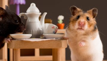 Rodent Removal and Re-Homing Service